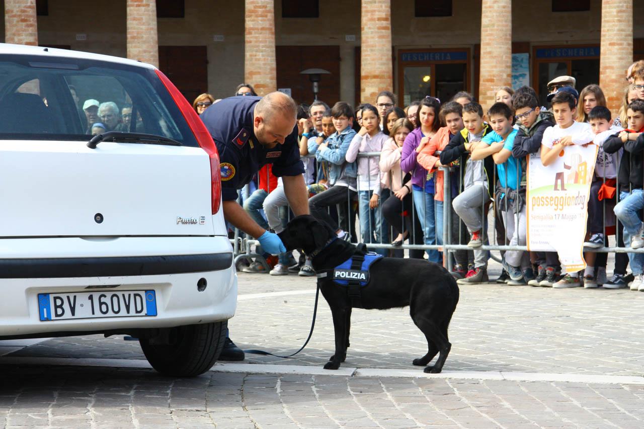 2014_Passeggiandog_scuole_047