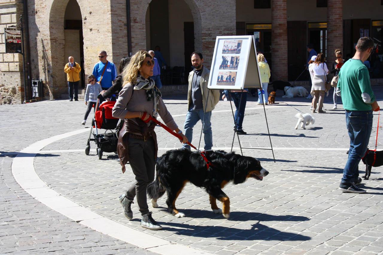 2014_Passeggiandog_086